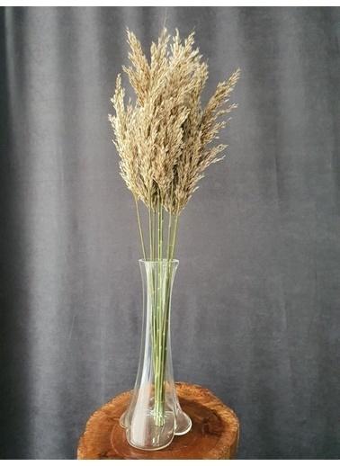 Kuru Çiçek Deposu Kuru Çiçek Şoklanmış 10'Lu Pampas Otu Karışık 100 Cm Kahve